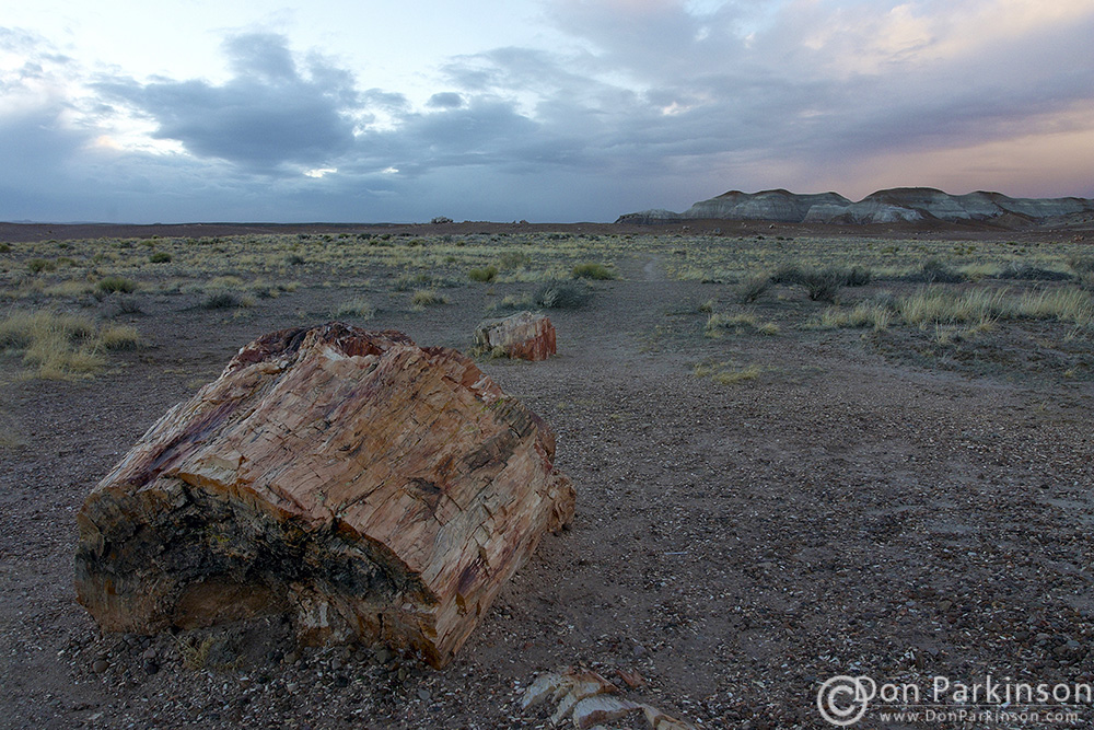 Petrified Forest 2005